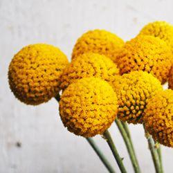 Craspedia Billy Balls Yellow Flower Fiftyflowers Com Billy Balls Yellow Flowers White Wedding Flowers Bouquet