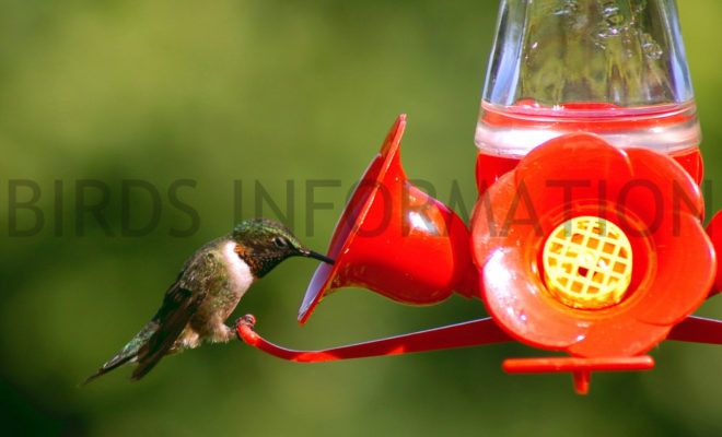 How To Make Homemade Hummingbird Food With Images Humming Bird Feeders