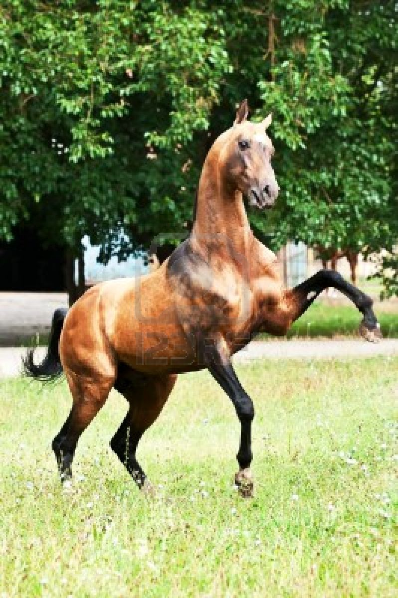 Simple Wallpaper Horse Akhal Teke - 0dfade83c953ae143e2c058429f4d73f  Collection_613495.jpg