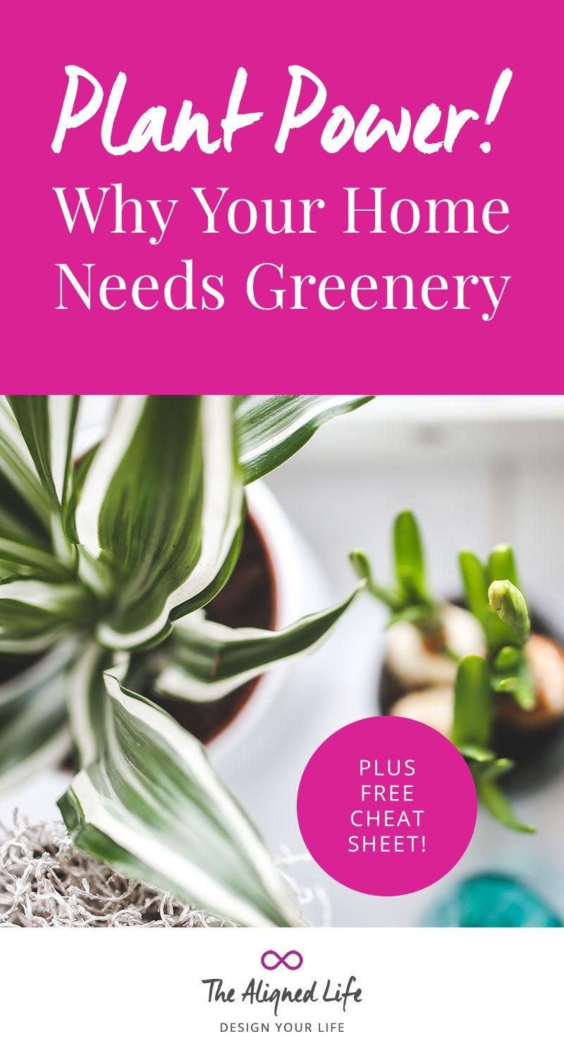 Usina!  Por que sua casa precisa de Verdura - Plus grátis Cheatsheet!  - A Vida Alinhados