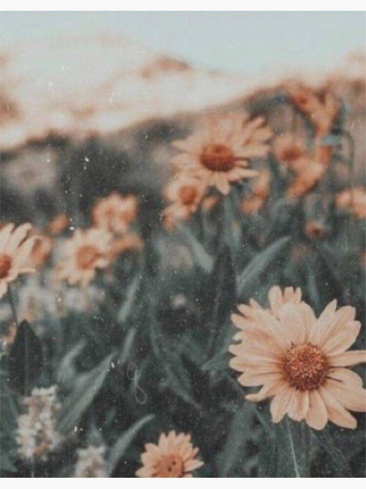 Sunflowers aesthetic Sticker
