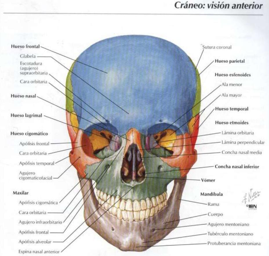 maravilloso | Anatomia en 2018 | Pinterest | Anatomía, Fisiología y ...