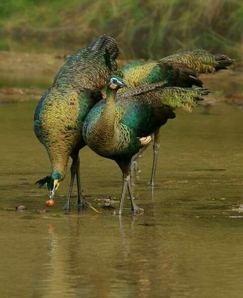 Maravillosas aves.