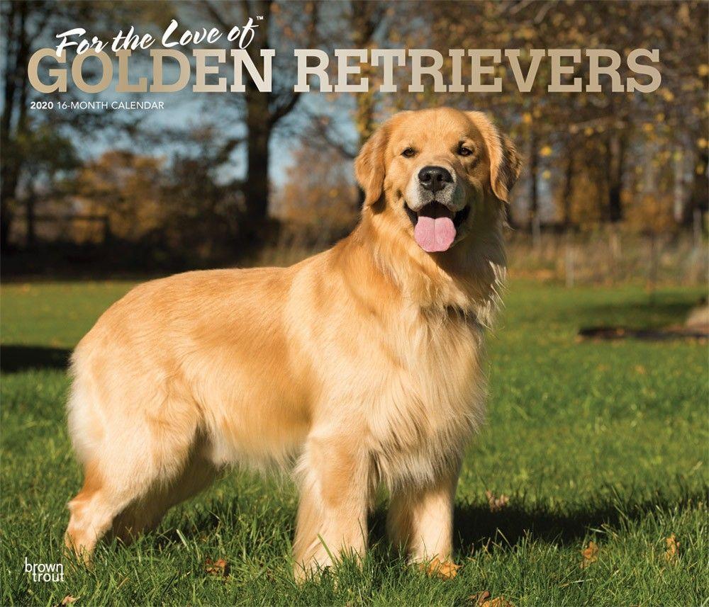 Golden Retrievers Deluxe 2020 Wall Calendar Dog Calendar Dog
