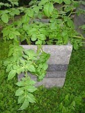 Kartoffelturm – Wikipedia
