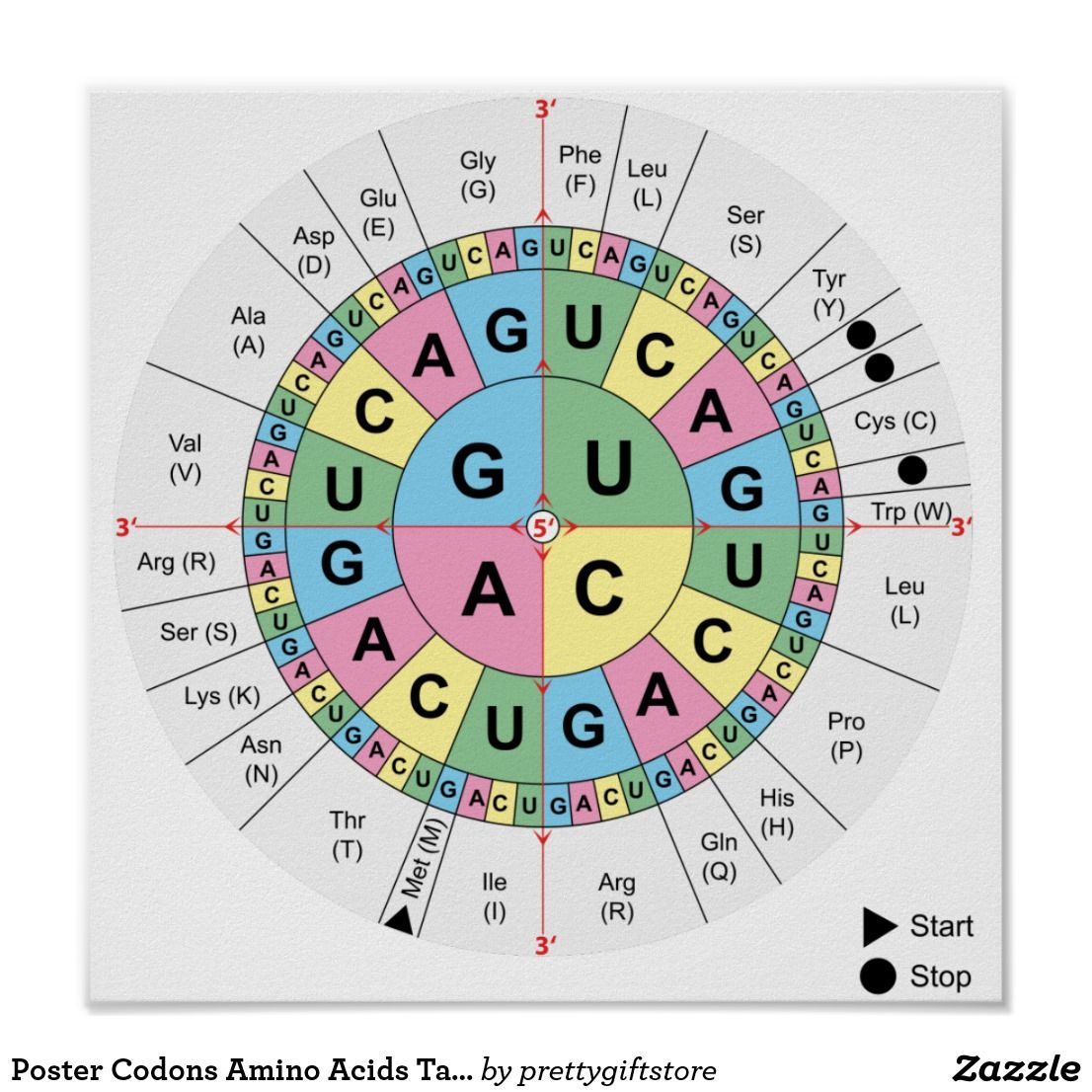 Poster Codons Amino Acids Table Genetic Code Dna