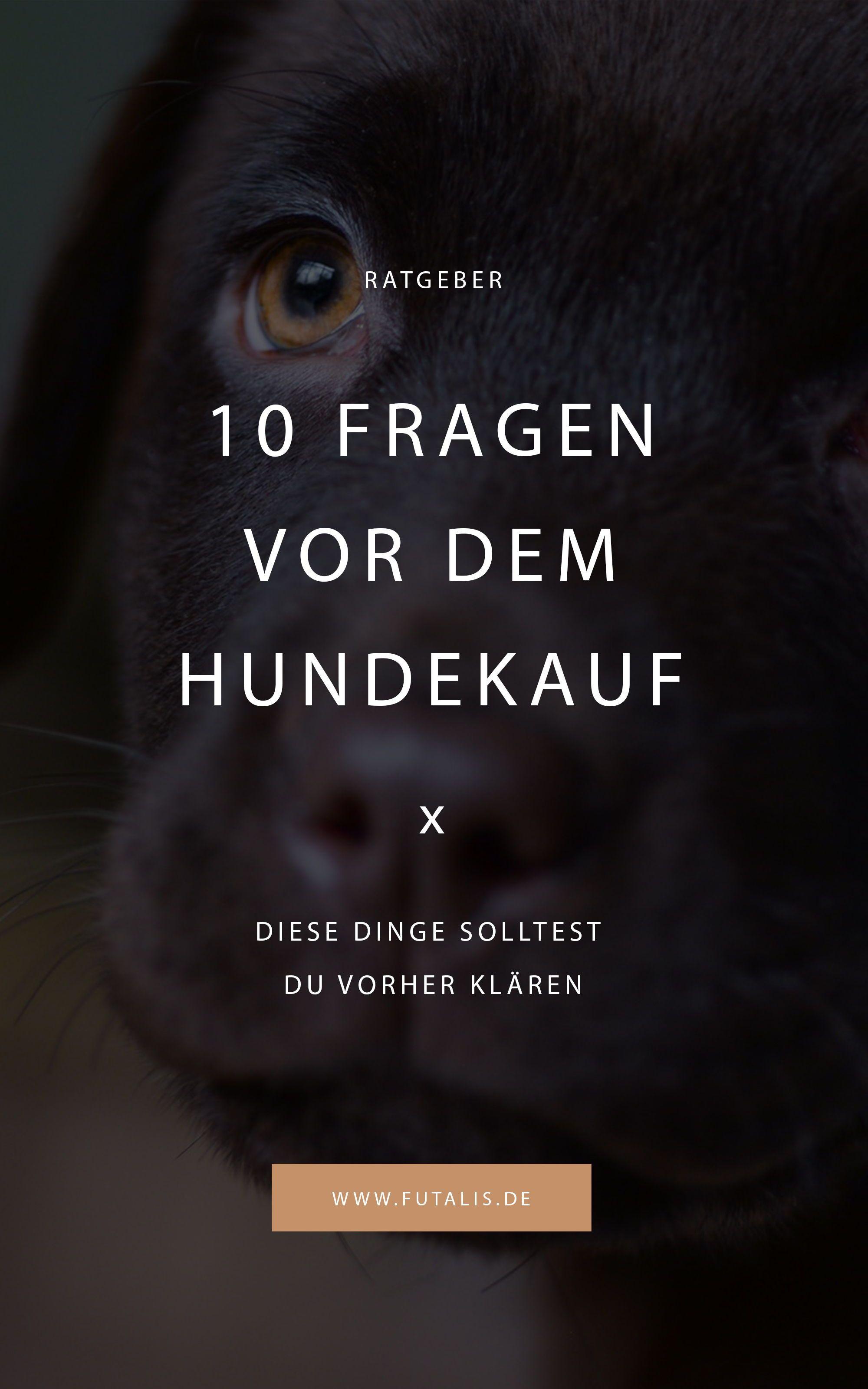 10 Fragen, die man sich vor dem Hundekauf stellen muss
