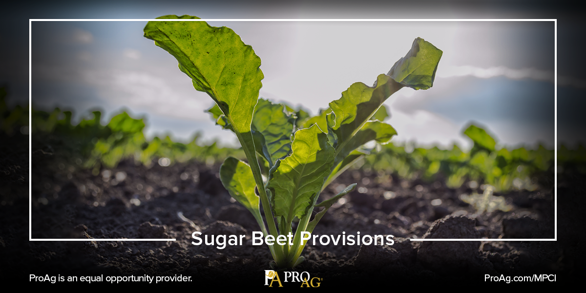 FAQ About the Sugar Beet Crop Insurance Provisions Crop