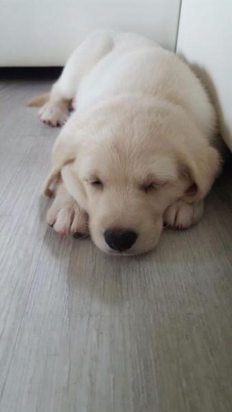 Unsere 4 Welpen 3 Hundinnen Und 1rude Wachsen Bei Uns Mit Viele
