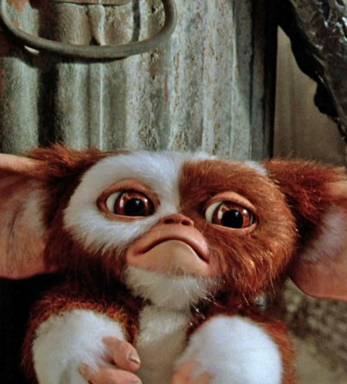 GIZMO!!!!! My momma told me this was the first time she ever heard me laugh was watching the movie gremlins! I was bound to be a mean thing lol