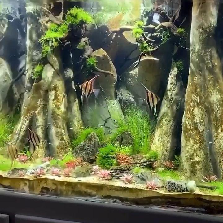 Aquadecor 3d Background Custom Made An Amazonian Model In The Angelfish Tank Aquade Video In 2020 Freshwater Aquarium Plants Fish Tank Decorations Fish Aquarium Decorations