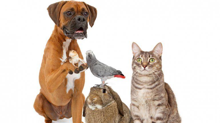 http://www.infobae.com/2016/04/29/1807654-por-que-se-celebra-hoy-el-dia-del-animal Compartí la foto de tu mascota con Infobae a través de Twitter y Facebook