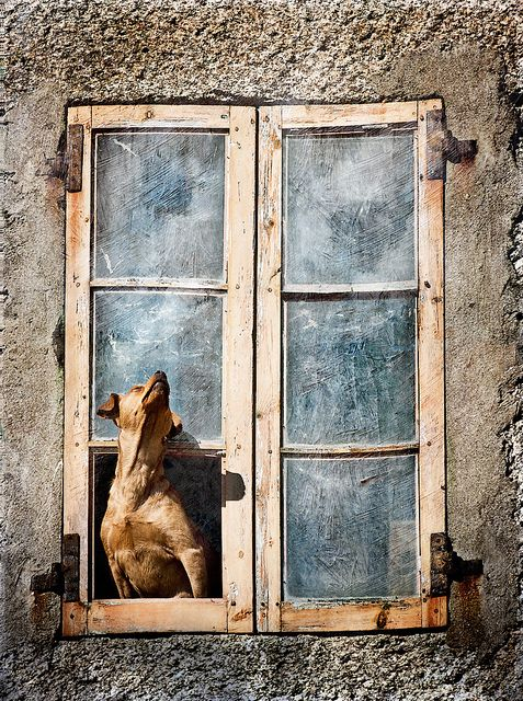 Heart-warming Pictures of Dogs in Windows