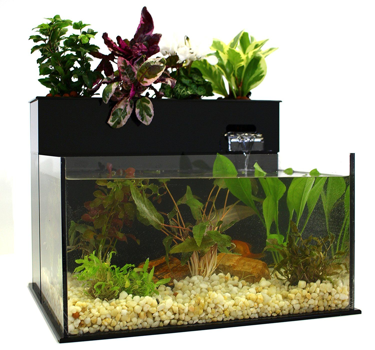 Fin to flower aquaponic aquarium midsize for Fish tank herb garden