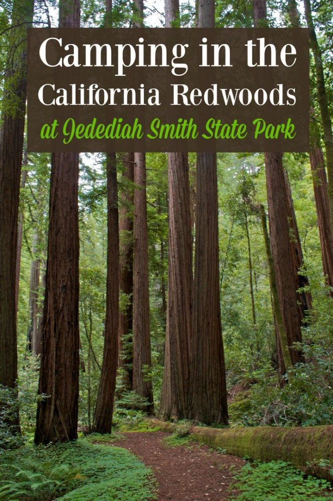 Family Camping in Jedediah Smith Redwood State Park | Camping, Park and  Camping places