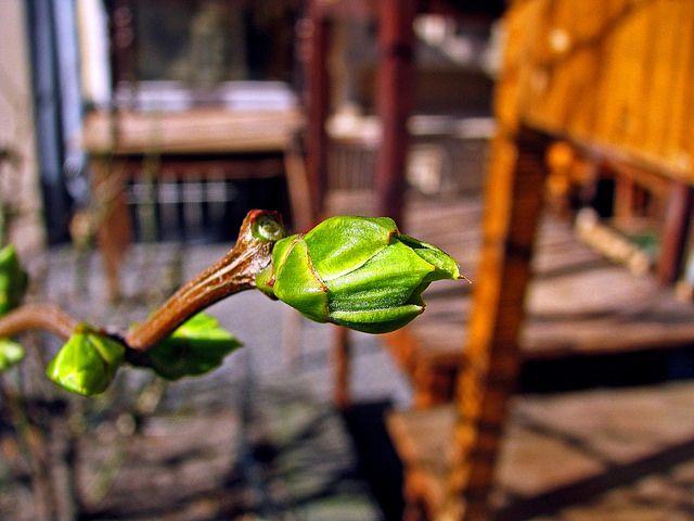 Erstes zartes Grün in der Stadt | Flickr: Intercambio de fotos