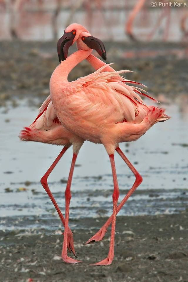 Flamingo Twitter