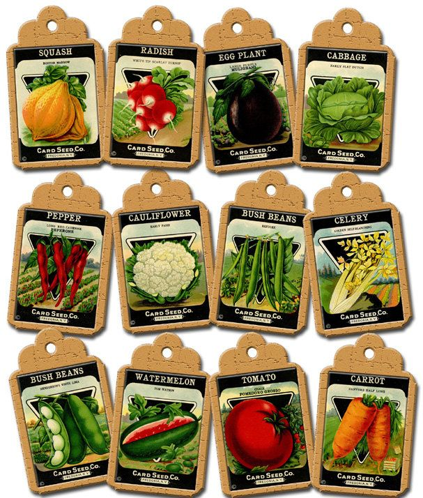Vintage Seed Packet Clip Art | VeGeTaBLe SeeD PaCkETs ViNtAgE ArT Hang/Gift  Tags