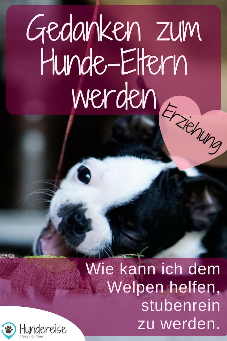June Zieht Ein Der Welpe Darf Nie Auf Die Couch Welpen Hunde Welpen Erziehung Und Stubenrein