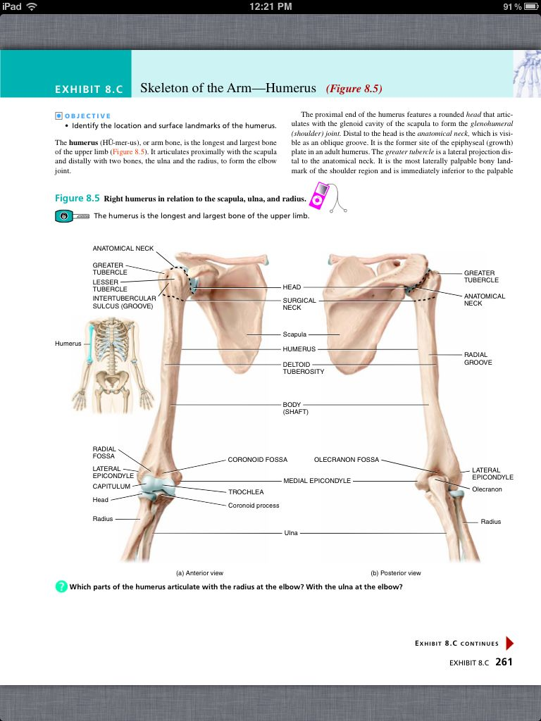 Principles of Anatomy and Physiology, Chapter 8, The Skeletal System ...
