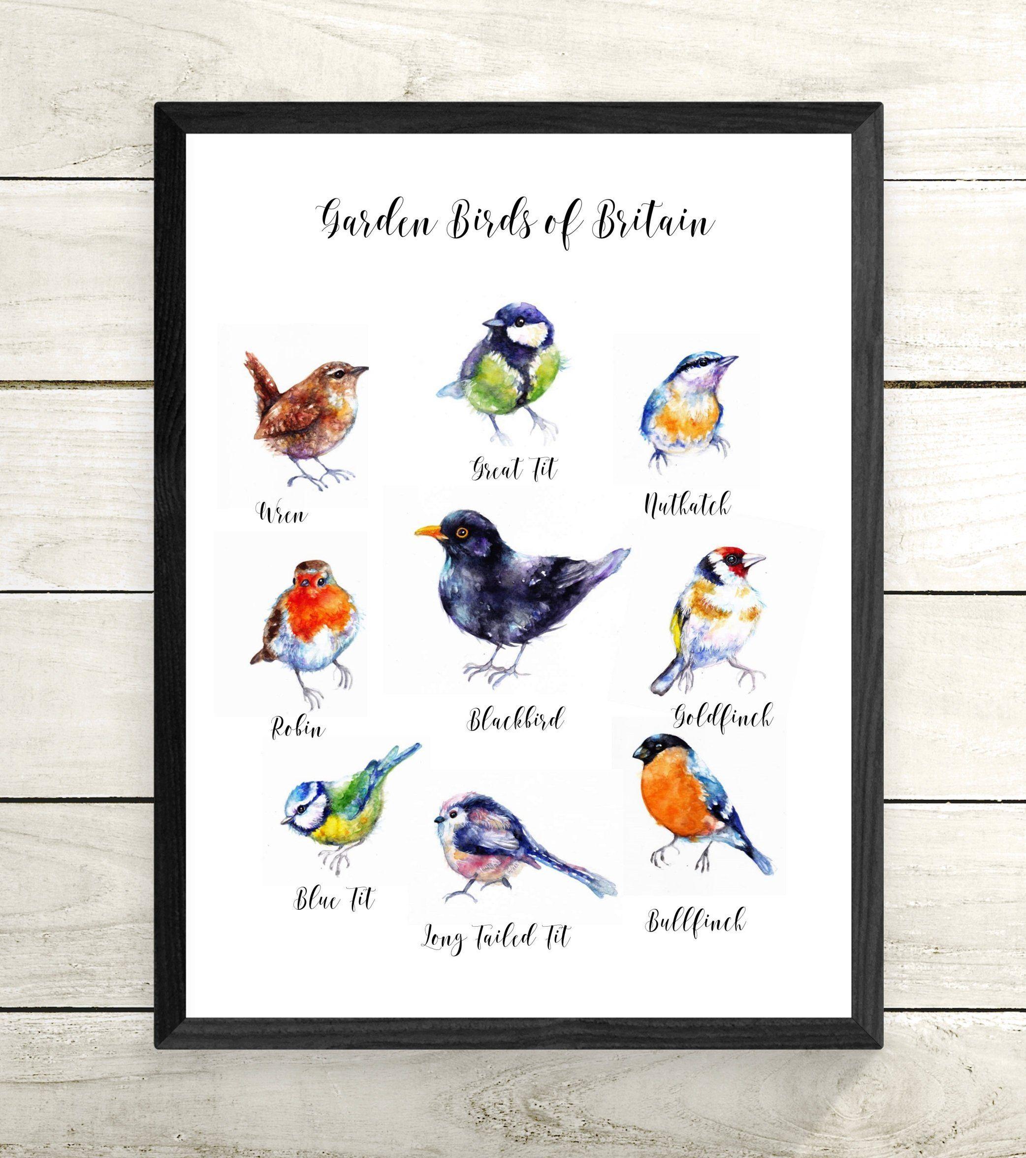 Garden Birds Wall Chart Sale Original Watercolour Painting Print