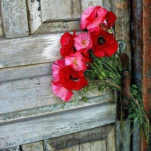 خلفيات صور صورة لايك لقطه لحظه جميله طبيعه اشجار شجر سحاب غيم فن لايك لايكات Beautiful Flowers Love Flowers Flowers