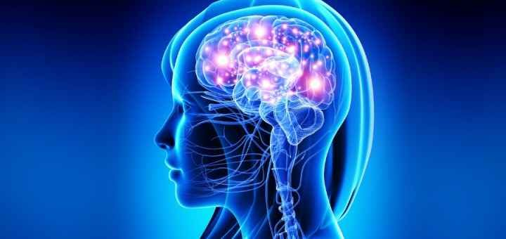 Il carattere dipende dalla conformazione del cervello Ognuno di noi ha la propria personalità e questa non è plasmata solamente dalle esperienze vissute e personalità carattere cervello