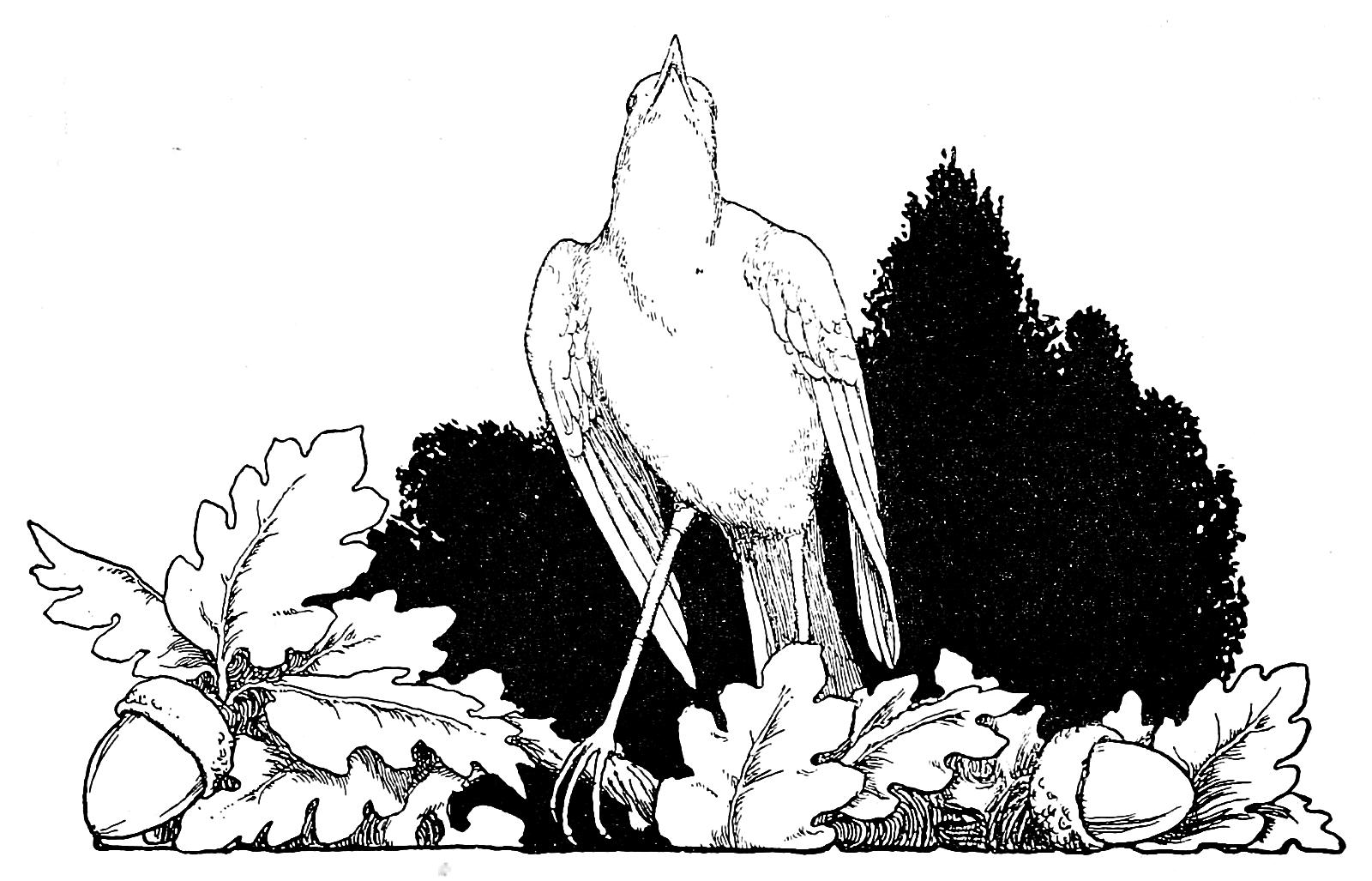 Волшебные Сказки Андерсена 1913 года 2 часть