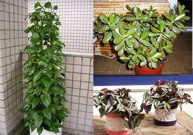 Plantas de interior rien de rien pinterest searching - Plantas de interior resistentes ...