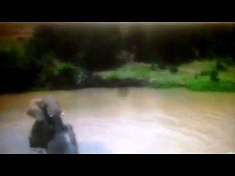 Elefantes Elephantidae Documental