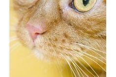 0e0387d01451c2c16246b1574263ccca - How To Get Rid Of Cat Dander On Furniture