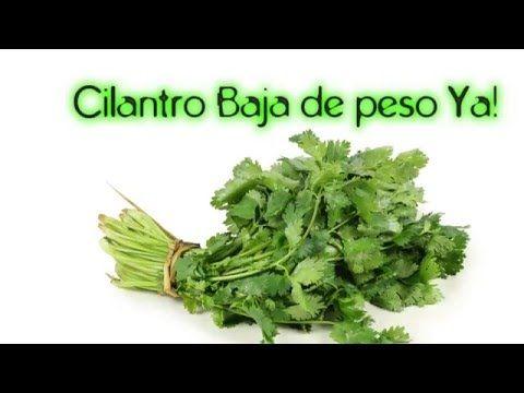 Para que sirve el cilantro? Infusion quema grasa - YouTube