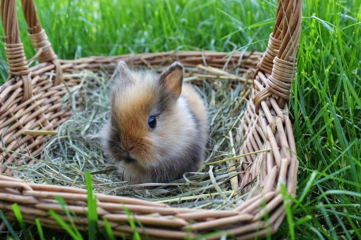 Nhd Zwergwidder Nhd Kaninchen Zwergkaninchen Kaninchen Jungtiere
