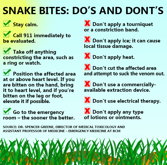 First Aid For Snake Bite Do's And Don'ts