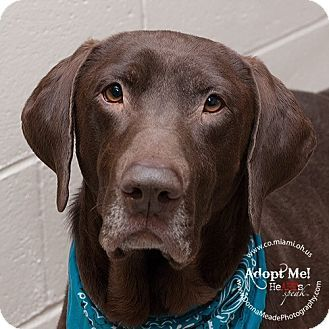 Adopted!! URGENT! I am at a kill shelter in Troy, OH