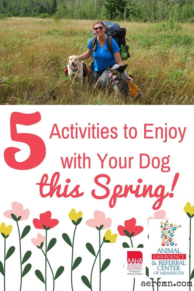 5 Activities to Enjoy with Your Dog this Spring Dog