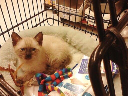 Let Me Sleep 6 Week Kitten Kittens Animals Cats