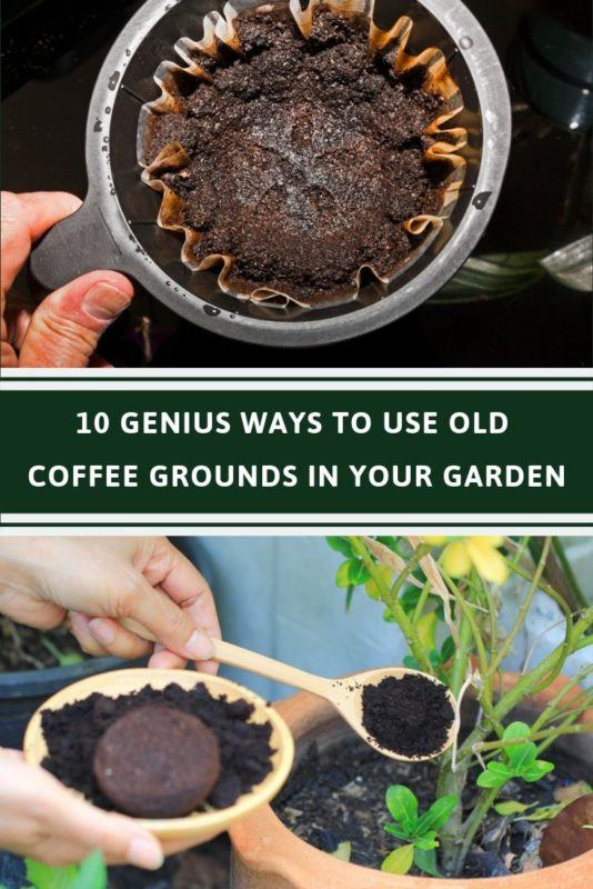 How To Use Coffee Grounds In Your Garden Coffee Grounds For Plants Uses For Coffee Grounds Coffee Grounds