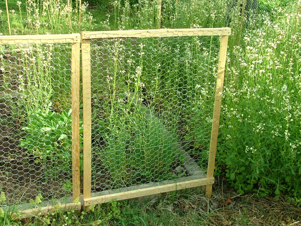 Framed Chicken Wire Fence Chicken Wire Fence And Wire Fence