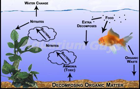 Guide To Freshwater Aquarium Setup Aquarium Setup Betta Fish Tank Aquarium Fish