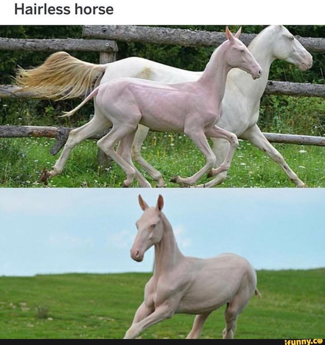 Weird, interesting colored horses   Horses, Hairless