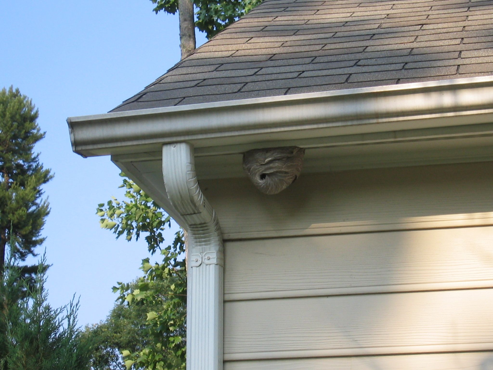 Hornet Nest Removal How To Get Rid Of Hornets Safely And Easily Wasp Nest Hornets Nest Bees Nest Removal