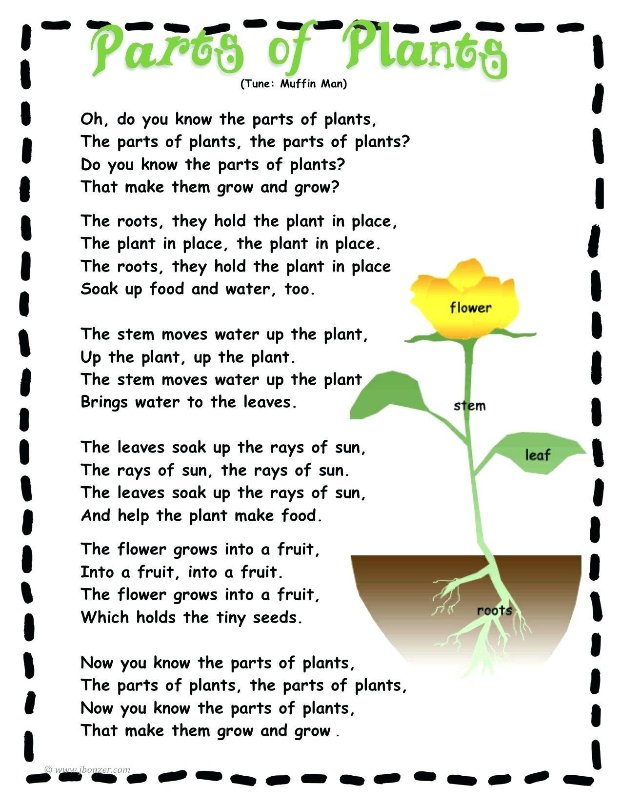 Label A Plant Worksheet Labeling Parts A Plant Worksheet