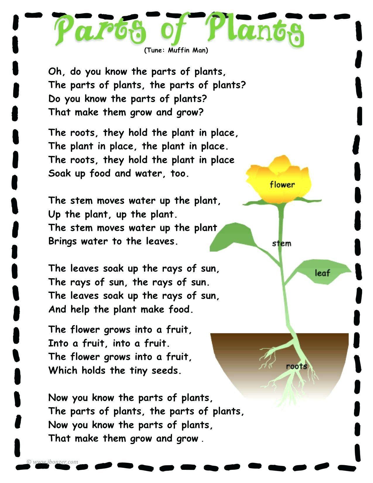 Label A Plant Worksheet Labeling Parts A Plant Worksheet