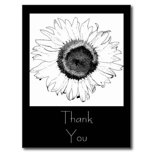 Customize the pretty Black and White Sunflower Thank You Postcard with your own personal note of thanks, gratitude and appreciation. Suitable to use for gifts received after a shower, engagement party, wedding or birthday. This elegant custom floral thank you note postcard features a digitally enhanced photograph of a sunflower blossom.