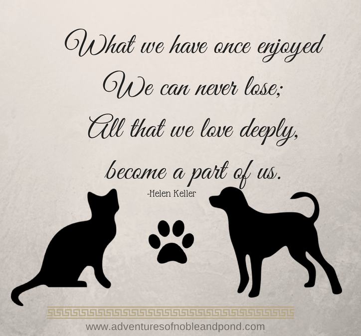 Pet Loss Quotes | Pin By Debbie Rinaldo On Pets I Ve Loved Lost Rescues Pet Loss