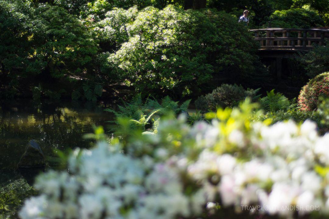 51 Weird + Fun Things to do in Portland Rose garden