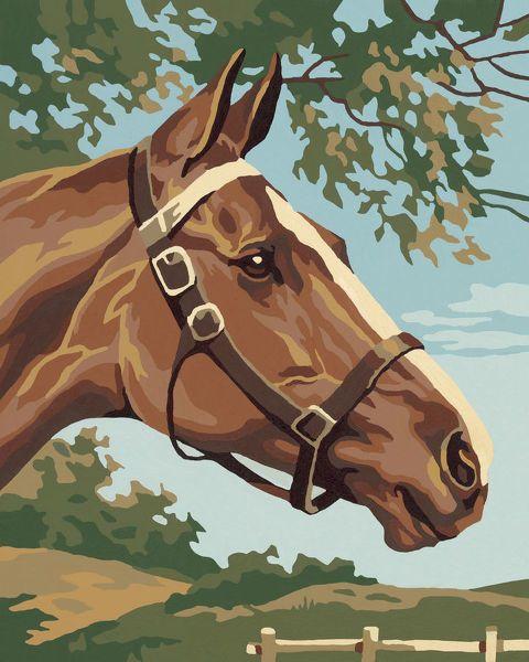 Photograph-Brown Horse-10