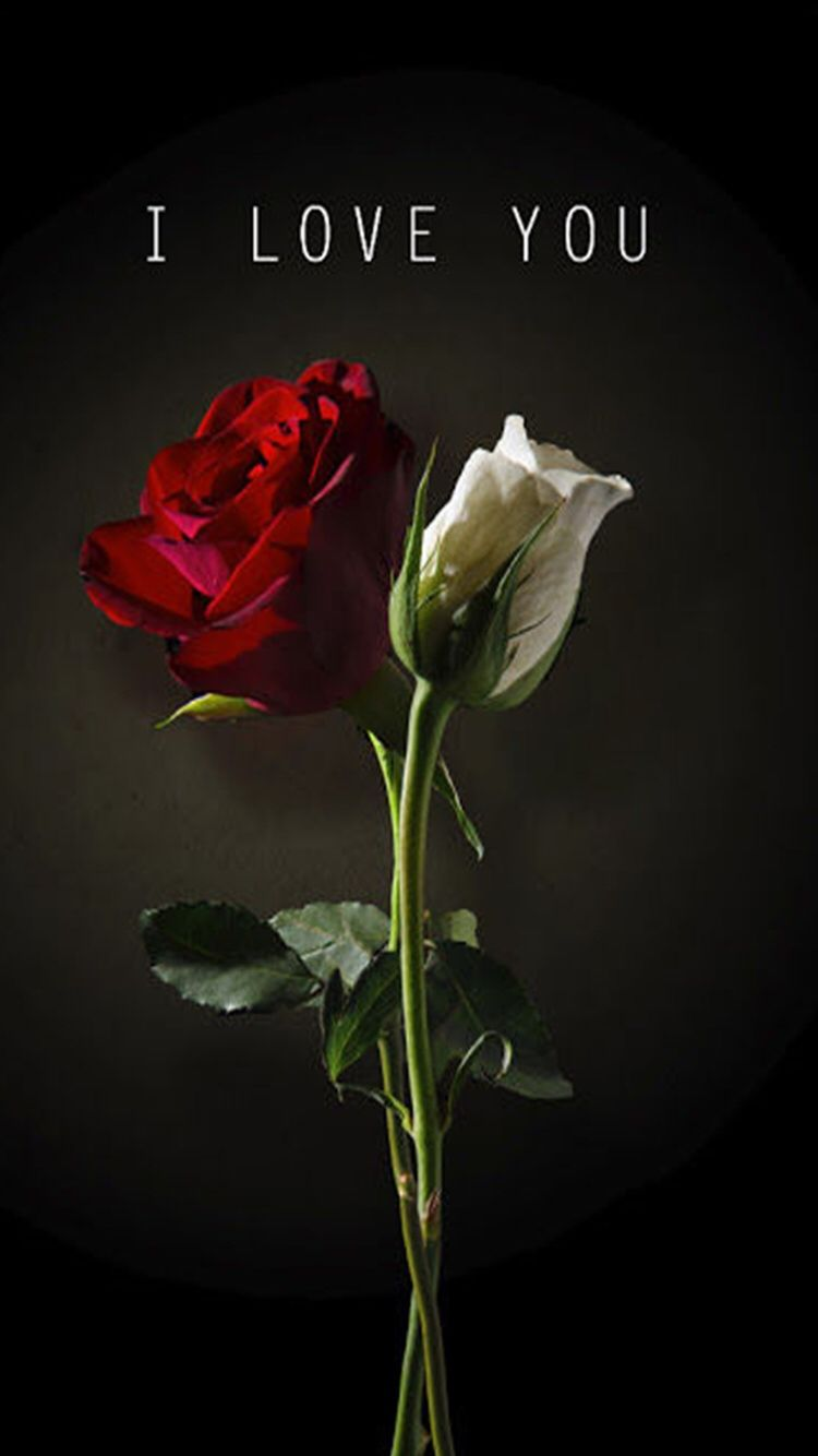 Check Out This Wallpaper For Your Iphone Http Zedge Net W10921605 Src Ios V 2 5 Via Zedge Rose Wallpaper Beautiful Flowers Wallpapers Red Roses Wallpaper