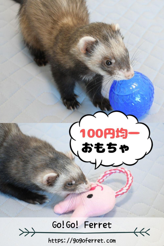 100円で買えるペット用おもちゃがコスパ最高だった ペット エキゾチックアニマル 小動物